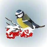 Meeszitting op snowcovered tak van lijsterbes De aard van de winter Vector illustratie Royalty-vrije Stock Foto's