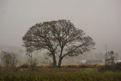 late autumn morning country tree stock photography