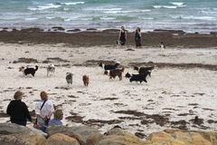 Meeting of border collie dogs and owners on an Australian beach, windy day. A group of border collie dogs and their owners gather on a windy Australian beach to royalty free stock photos