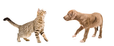 Meeting cat and puppy Royalty Free Stock Photos