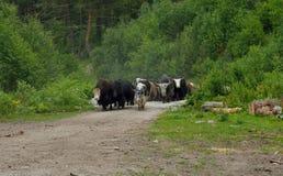Meeting in Caucasus Stock Image