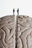 Meeting of the minds. Business figurines placed on a brain model Stock Photos