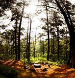 Meeting Place. A setting not unlike Lord of the Rings style. This is located somewhere in forest trail of Camp John Hay up in the Mountian Province Stock Photo
