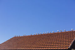 Meeting seagulls on the roof Royalty Free Stock Photo