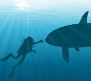 Meeting under water. Diver and orca Royalty Free Stock Photography