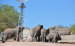 Meeting at the well. Elephants drinking from a well in Namibia Africa Stock Photos