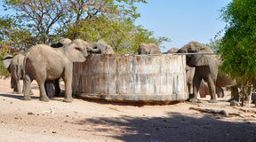 Meeting at the well. Elephants drinking from a well in Namibia Africa Stock Image