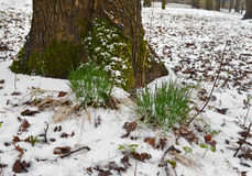 Meeting of winter and spring 3. stock photo