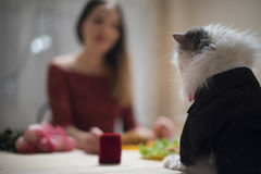 Meeting of a young girl and a cat Royalty Free Stock Photography
