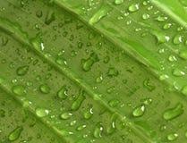Meetkunde van regen Royalty-vrije Stock Afbeeldingen