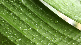 Meetkunde van regen Stock Foto's