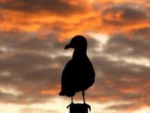 Meeuw bij Zonsondergang Stock Afbeelding