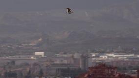Meeuw die over de stad vliegen stock videobeelden