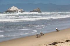 Meeuwen bij het strand Royalty-vrije Stock Fotografie