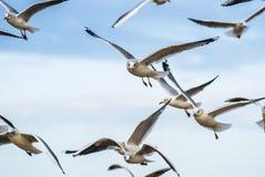 Meeuwen die in de lucht vliegen Meeuwen die in de lucht vliegen Royalty-vrije Stock Afbeeldingen