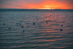 Meeuwen die op het strand door het overzees bij zonsondergang drijven stock foto