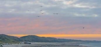 Meeuwen die over duinen langs de Noordzeekust bij zonsopgang vliegen royalty-vrije stock fotografie