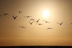Meeuwen in gouden horizon Stock Foto