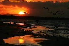 Meeuwen op de kust bij zonsondergang 11 Royalty-vrije Stock Foto