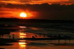 Meeuwen op de kust bij zonsondergang 10 Stock Foto's