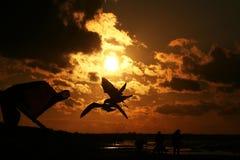 Meeuwen op de kust bij zonsondergang 8 Royalty-vrije Stock Foto's
