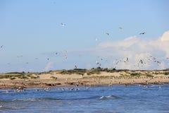 Meeuwen op de Noordzeekust stock afbeeldingen