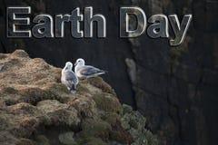 Meeuwen op de rots op het Eiland van Lewis en Harris in Noordwestenschotland royalty-vrije stock afbeeldingen