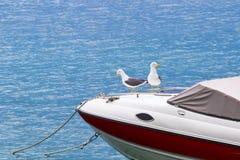 Meeuwen op een boot Stock Foto