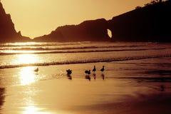 Meeuwen op het Strand bij Zonsondergang Royalty-vrije Stock Foto's