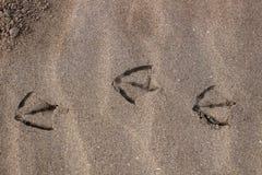 Meeuwvoetafdrukken door het zand royalty-vrije stock foto