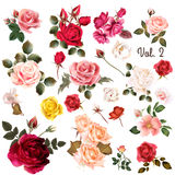 Mega collection of high detailed vector flowers for design vector illustration