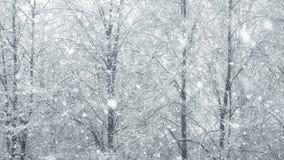 Mega extra big global snowfall loop tree winter stock footage