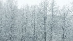 Mega extra big global snowfall loop tree winter stock video