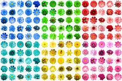 Mega pack of 150 in 1 natural and surreal blue, yellow, red, pink, green and turquoise flowers isolated Royalty Free Stock Photos