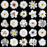 Mega pack of natural and surreal white flowers 25 in 1 isolated Royalty Free Stock Images