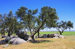 Megalith and Holly Oak Royalty Free Stock Image