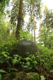 Megalithic Tomb Pustow Royalty Free Stock Photography