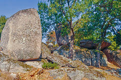 Megaliths. Congestion of megaliths among an oak grove Stock Image