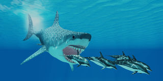 Megalodon Attack. A huge Megalodon shark swims after a pod of Striped dolphins Stock Photo
