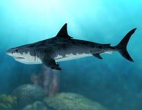 Megalodon Extinct Mega Shark. 3D render of an extinct Megalodon shark in the seas of the Cenozoic Era royalty free illustration
