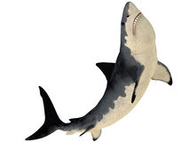 Megalodon Profile Royalty Free Stock Photos