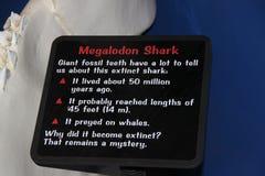 Megalodon shark jaws description close up. Museum. Tourism. Exhibition. Los Angeles. SEAWORLD Stock Image