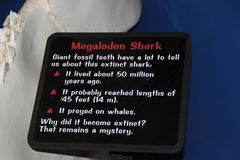 Megalodon shark jaws close up. Museum. Tourism. Exhibition. Sea World San Diego royalty free stock photo