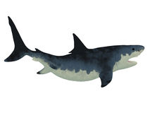 Megalodon Shark over White Royalty Free Stock Image