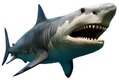 Megalodon stock photography