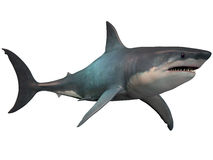 Megalodon on White Stock Image