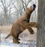 Megalonyx che cerca albero Fotografia Stock