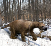 Megalonyx In Ice Age Forest. An illustration of the extinct giant ground sloth Megalonyx slowing mmaking his way through an Ice Age Ohio forest. Megalonyx Royalty Free Stock Image