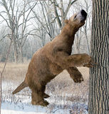 Megalonyx Searching Tree Stock Photography
