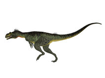 Megalosaurus Side profile Royalty Free Stock Photography